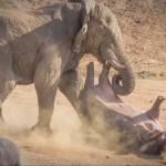 L'éléphant est le plus fort